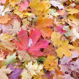 Herbst: Werbeartikel-Zeit